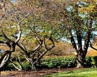Tree & Lawn Maintenance -15
