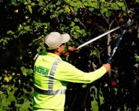 Tree Trimming   Land Maintenance Service