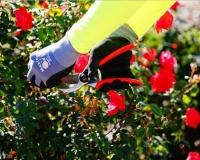Commercial Land Maintenance Services