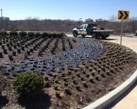 Commercial Landscape Maintance Services
