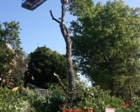 Tree Trimming & Maintenance Company