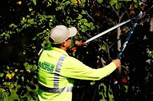 Military Landscape Maintenance Services