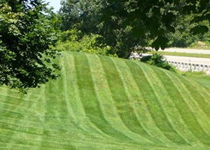 New Lawn Installation Services